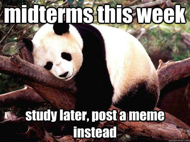 midterms this week study later, post a meme instead  Procrastination Panda