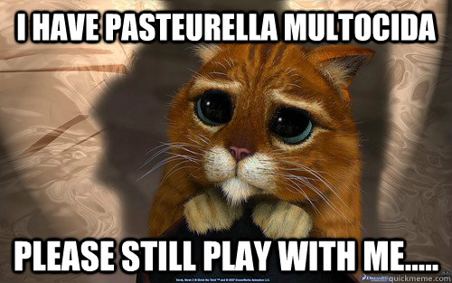 I have Pasteurella multocida Please still play with me.....  Sad cat
