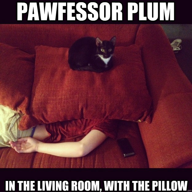 Pawfessor Plum in the living room, with the pillow - Pawfessor Plum in the living room, with the pillow  jealous cat