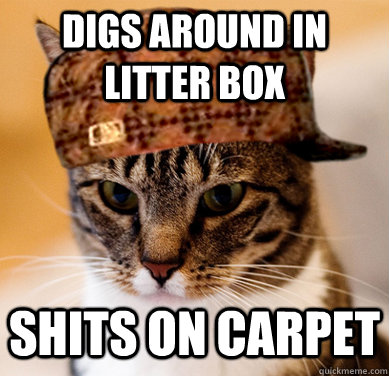 digs around in litter box shits on carpet - digs around in litter box shits on carpet  Scumbag Cat