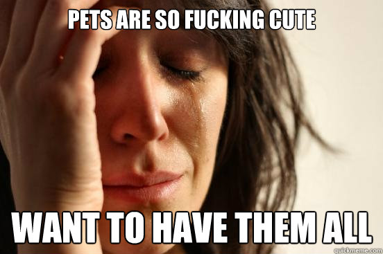 pets are so fucking cute want to have them all - pets are so fucking cute want to have them all  First World Problems