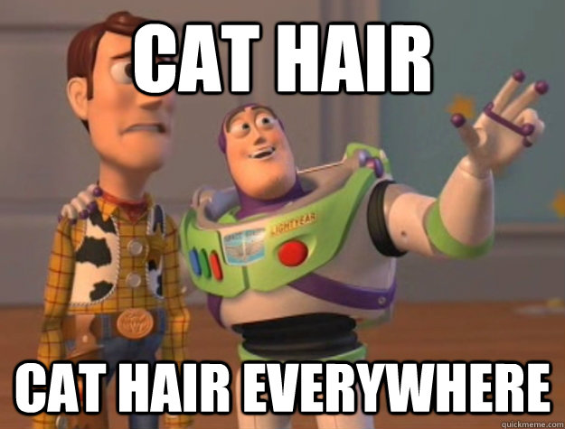 Cat hair Cat hair everywhere  Buzz Lightyear