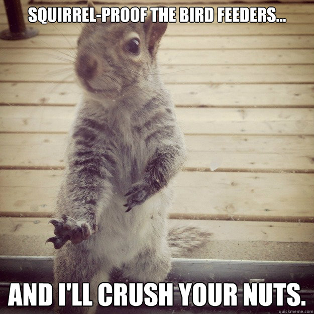 e03980c943a5f0fb29b1b79f4ca701ef07b832a253a4562083f0bf11da7c191b squirrel proof the bird feeders and i'll crush your nuts