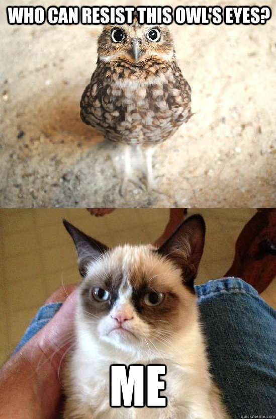 Who can resist this Owl's eyes? ME - Who can resist this Owl's eyes? ME  Grumpy cat angry at birdie