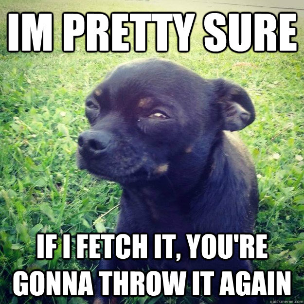 im pretty sure if i fetch it, you're gonna throw it again - im pretty sure if i fetch it, you're gonna throw it again  Skeptical Dog