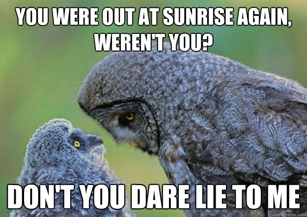 You were out at sunrise again, weren't you? Don't you dare lie to me - You were out at sunrise again, weren't you? Don't you dare lie to me  Dysfunctional Owl Family