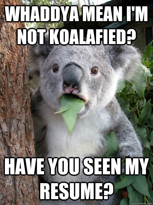 Whaddya mean I'm not koalafied? have you seen my resume? - Whaddya mean I'm not koalafied? have you seen my resume?  koala bear