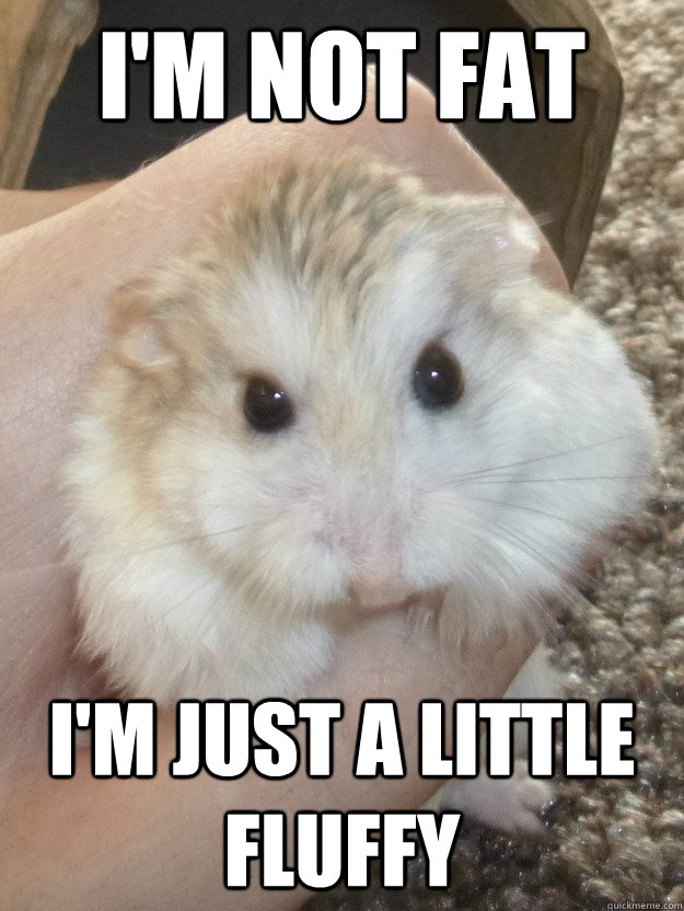 I'm not fat I'm just a little fluffy  Sad Hamster