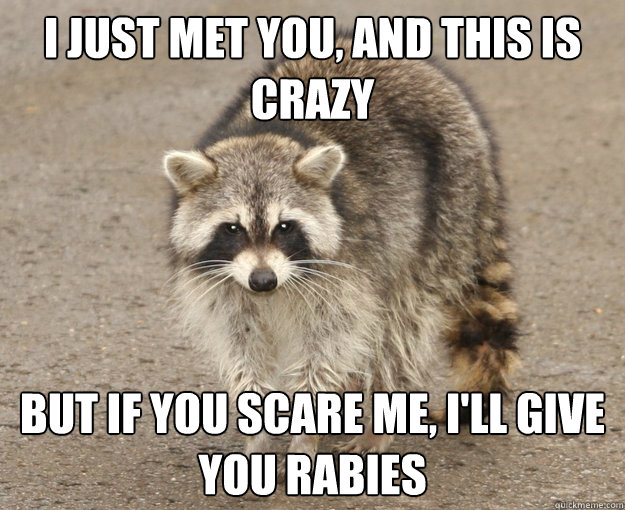 i just met you, and this is crazy but if you scare me, i'll give you rabies - i just met you, and this is crazy but if you scare me, i'll give you rabies  raccoon meme