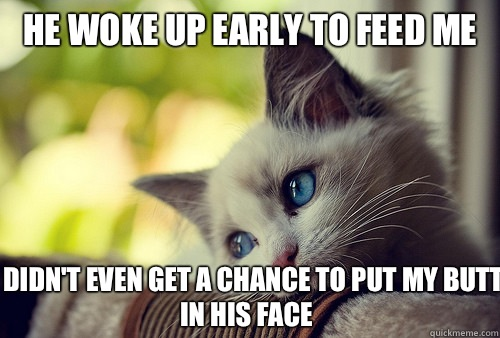 He woke up early to feed me I didn't even get a chance to put my butt in his face - He woke up early to feed me I didn't even get a chance to put my butt in his face  First World Problems Cat