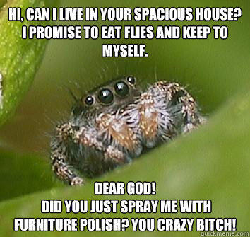 Hi, can i live in your spacious house? I promise to eat flies and keep to myself. dear god!  did you just spray me with furniture polish? you crazy bitch!  Misunderstood Spider