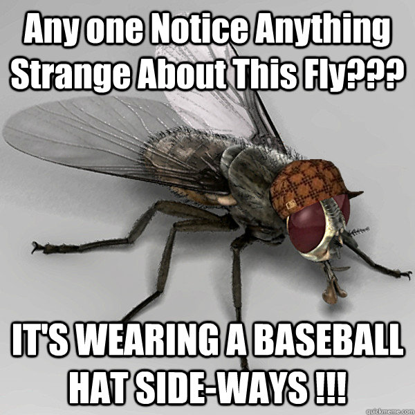 Any one Notice Anything Strange About This Fly??? IT'S WEARING A BASEBALL HAT SIDE-WAYS !!!  - Any one Notice Anything Strange About This Fly??? IT'S WEARING A BASEBALL HAT SIDE-WAYS !!!   Scumbag Fly