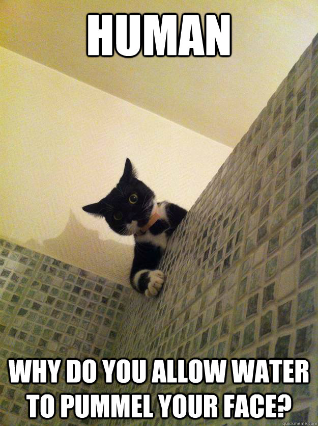 human Why do you allow water to pummel your face? - human Why do you allow water to pummel your face?  Incredulous Cat