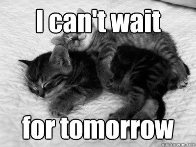 snuggle kittens memes | quickmeme