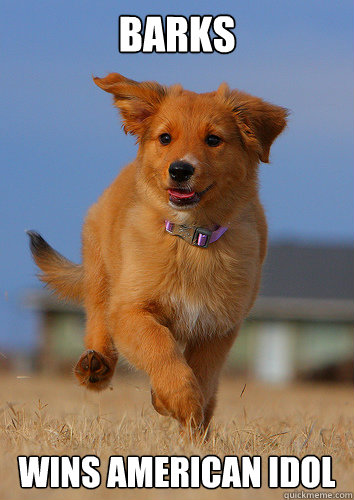 Barks wins american idol - Barks wins american idol  Ridiculously Photogenic Puppy