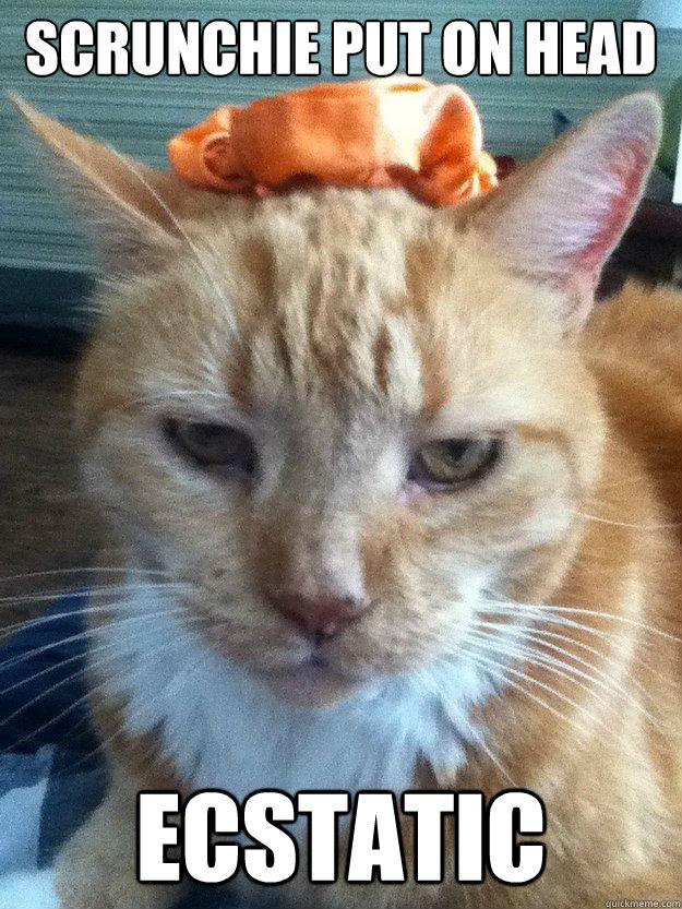 Scrunchie put on head Ecstatic