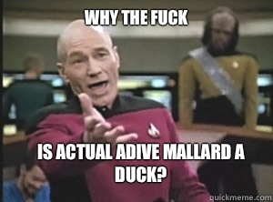 why the fuck Is actual adive mallard a duck? - why the fuck Is actual adive mallard a duck?  Annoyed Picard