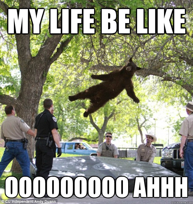 My life be like ooooooooo ahhh  falling bear