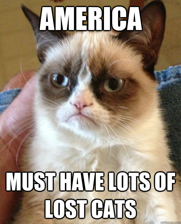 America must have lots of lost cats - America must have lots of lost cats  Grumpy Cat