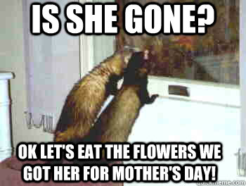 Is She Gone Ok Lets Eat The Flowers We Got Her For Mothers Day
