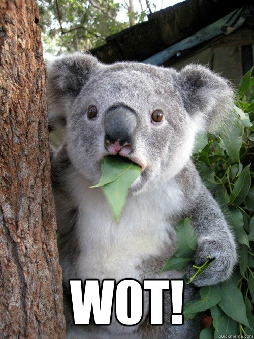 W0T!   Surprised Koala