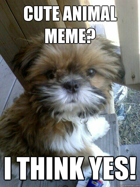 CUTE ANIMAL MEME? I think yes!