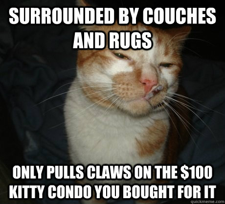 Surrounded by couches and rugs Only pulls claws on the $100 kitty condo you bought for it