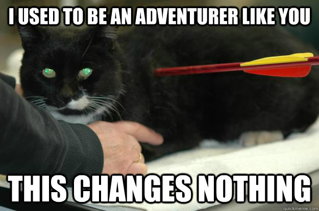 I used to be an adventurer like you This changes nothing  Worlds Toughest Cat