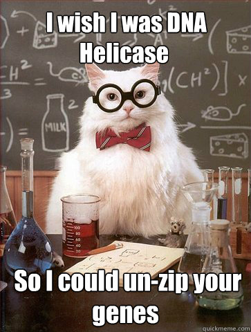 I wish I was DNA Helicase  So I could un-zip your genes