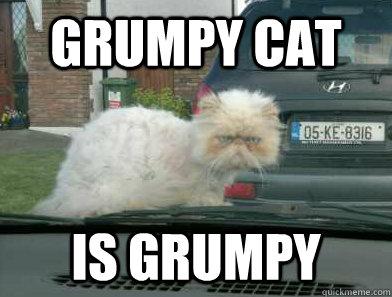 Grumpy cat is grumpy - Grumpy cat is grumpy  Misc