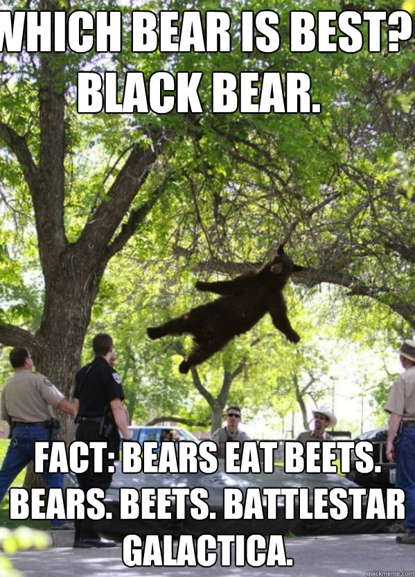 Which BEAR is BEST? Black Bear. FACT: Bears eat beets. BEARS. BEETS. BATTLESTAR GALACTICA.  i am a falling bear
