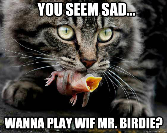 You seem sad... Wanna play wif Mr. Birdie?