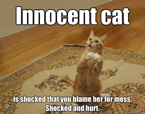 Innocent cat is shocked that you blame her for mess. Shocked and hurt.