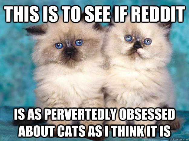This is to see if reddit is as pervertedly obsessed about cats as i think it is  Viva La Anti-Cat Revolution