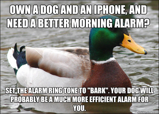 Own a dog and an iPhone, and need a better morning alarm? Set the alarm ring tone to