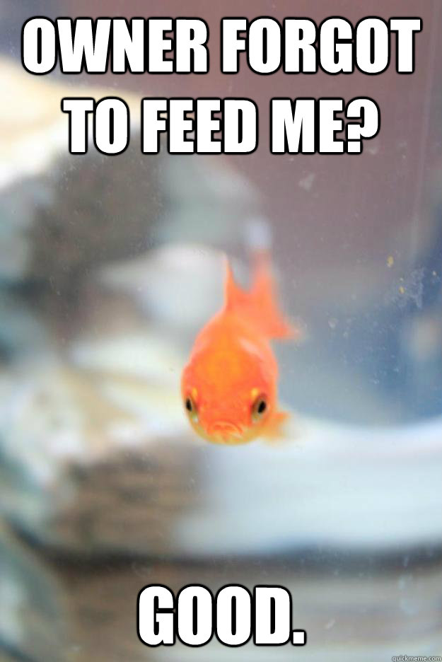 Owner forgot to feed me? Good. - Owner forgot to feed me? Good.  Grumpy Fish