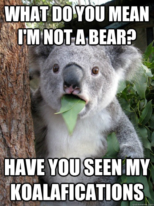 What do you mean I'm not a bear? Have you seen my koalafications