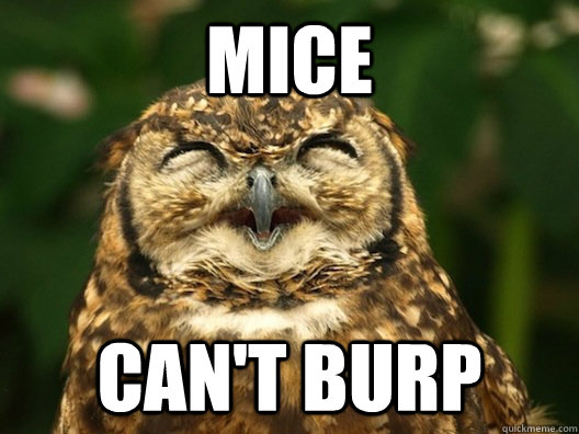 Mice Can't burp - Mice Can't burp  Useless Fact Owl
