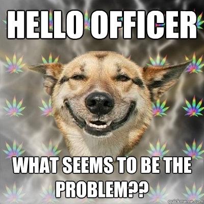 Stoner Dog  Dog memes Smiling dogs Happy dogs