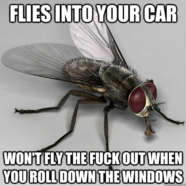 flies into your car won't fly the fuck out when you roll down the windows - flies into your car won't fly the fuck out when you roll down the windows  Scumbag Fly