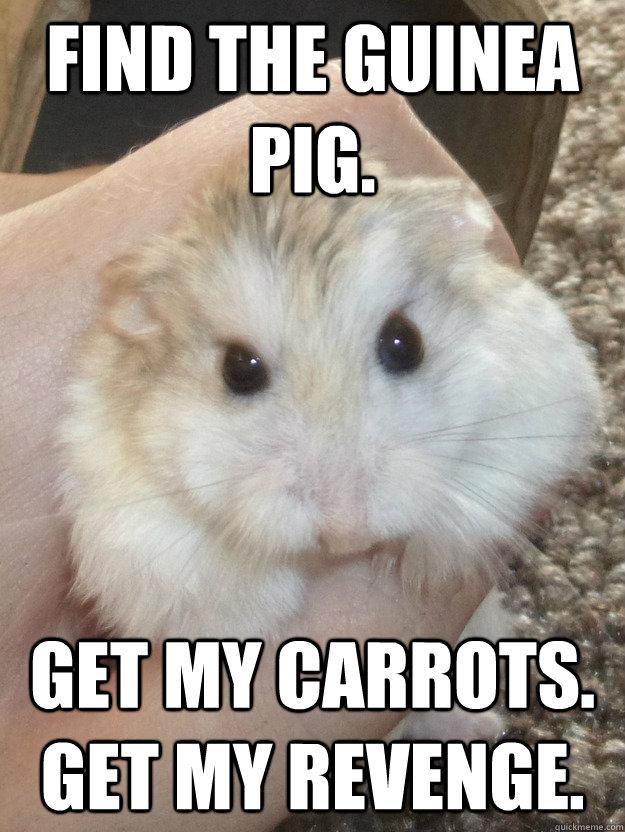Find the Guinea Pig.  Get my carrots. Get my revenge.  Sad Hamster