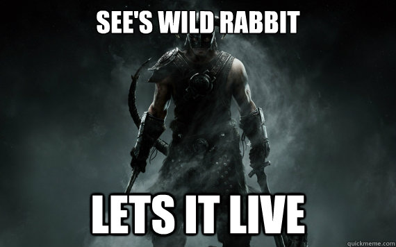 see's wild rabbit lets it live