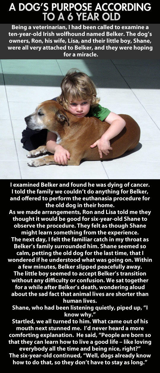 Kid Has To Deal With One Of The Saddest Moments In Life, This Is How He Reacts... -   Misc