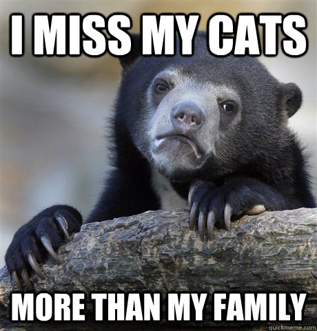 I miss my cats more than my family - I miss my cats more than my family  Confession Bear