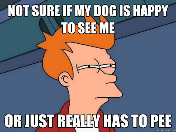 Not sure if my dog is happy to see me or just really has to pee - Not sure if my dog is happy to see me or just really has to pee  Futurama Fry