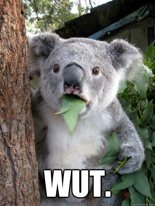 wut  Surprised Koala  Wait Wut Meme