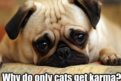 Why do only cats get karma? - Why do only cats get karma?  sad doggie