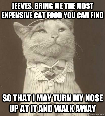 grumpy cat funnies