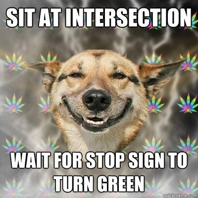 Sit at intersection wait for stop sign to turn green  Stoner Dog