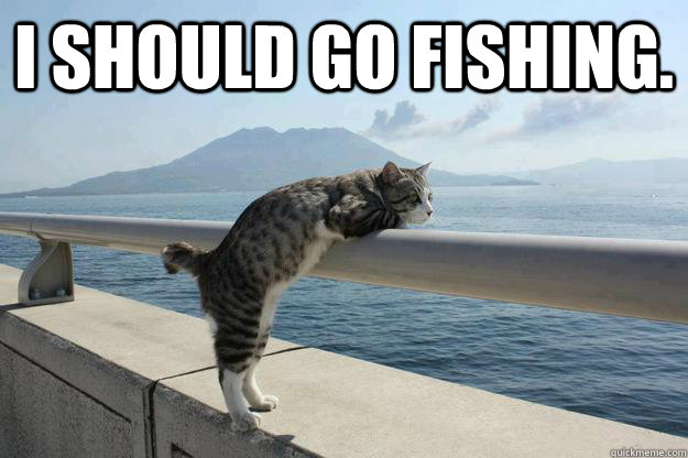 I should go fishing dreaming cat quickmeme for Cats go fishing